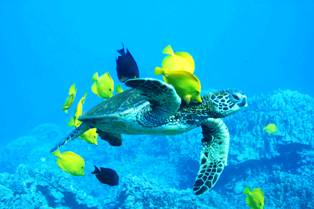 جزیره پاک یک عنوان واقعی برای کیش است