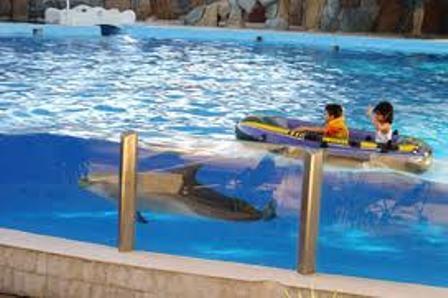 پارك دلفین های كیش