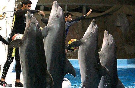 پارك دلفين هاي كيش