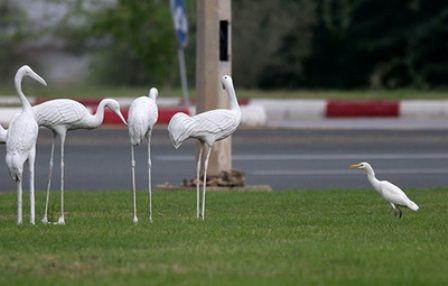كوچ پرندگان مهاجر به كيش